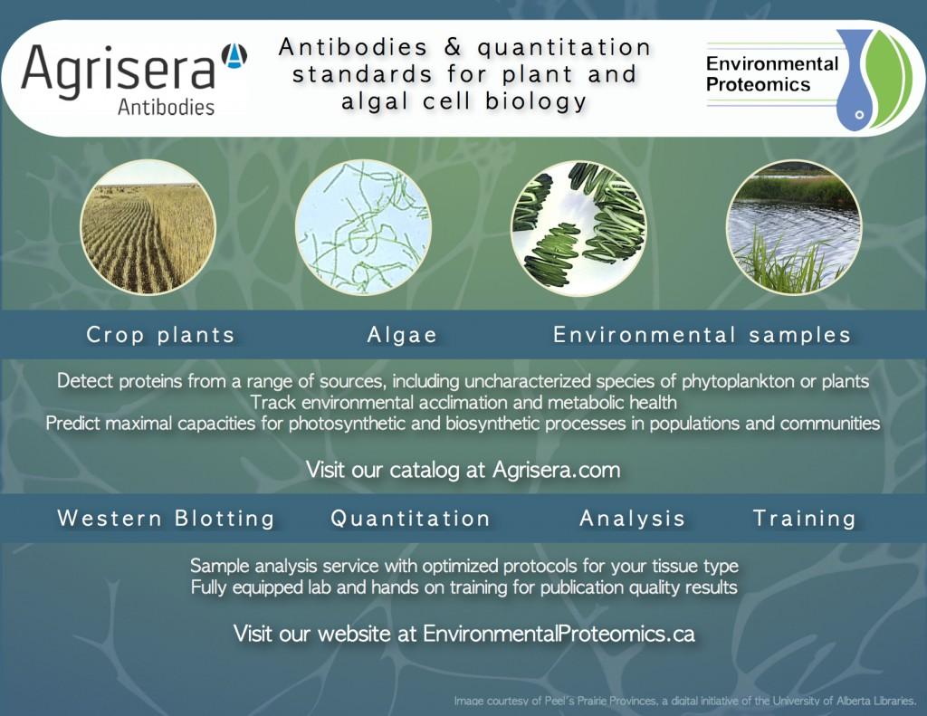 Bioenergy2014ad